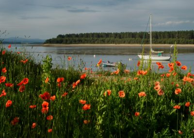 Findhorn Bay when the poppies are blooming