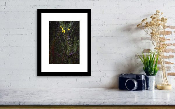 Broom Forest Print 1