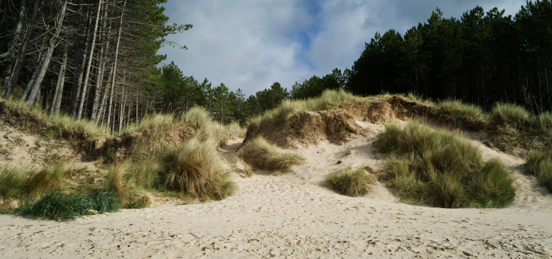 Burghead Beach sand dunes and forest