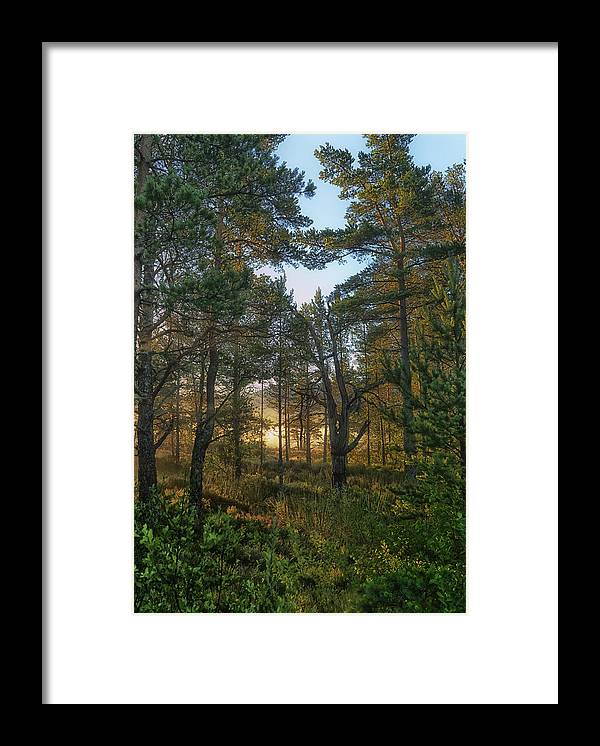 Highland Forest Print 1